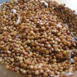 LENTICCHIA DELL'ALTOPIANO DI RASCINO, coltivata unicamente sull'Altipiano a confine con l'Abruzzo, tra i 1220-1400 slm. Maggiori info su: http://www.fondazioneslowfood.com/it/presidi-slow-food/lenticchia-di-rascino/