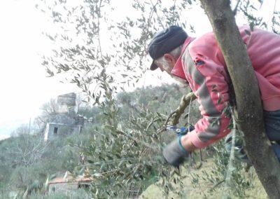 GIANOLIO Corsi di potatura dell'olivo - RietiTour.it